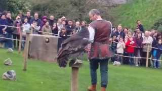 preview picture of video 'Falconry at Warwick Castle'