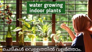 How To Grow Indoor Plants In Water/ Easy Way To Grow Indoor Plants In Malayalam. By Botanical Woman