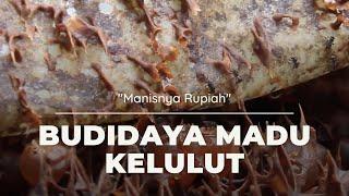 Manisnya Rupiah dari Budidaya Madu Kelulut