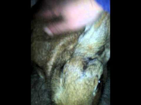 Guardare i video di sesso bestialità in linea