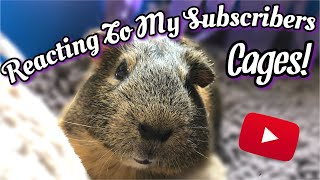 Reacting To My Subscribers Guinea Pig Cages!