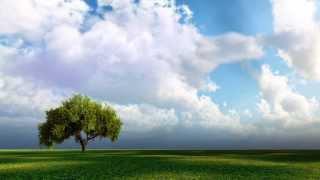 White Doves Lyrics - Cider Sky
