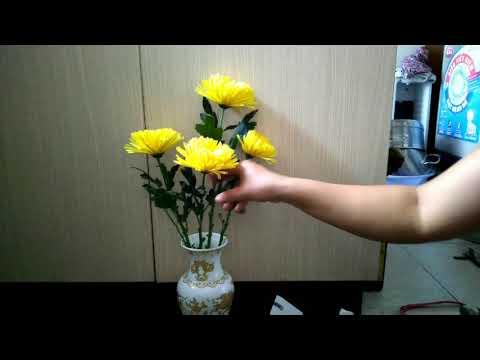 Cắm hoa cúc chưng.