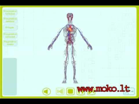 Citrina kelia arba mažina kraujo spaudimą