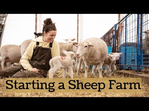 , title : 'How We Started Our Sheep Farm FROM SCRATCH!! (& Tips For Beginners):Vlog 161