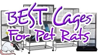 EXCELLENT Cages for Pet Rats | All About Rat Cages: Episode 3