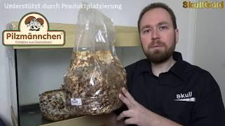 Wie züchtet man Shiitake Pilze ? IN 4K Teil1