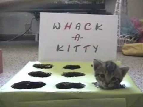 Whac-A-Kitty Is a Case of Cruel and Unusual Cuteness
