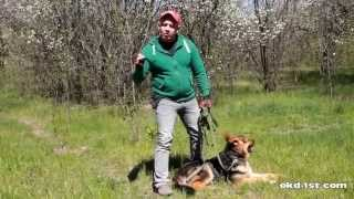 Смотреть онлайн Дрессировка немецкой овчарки в домашних условиях