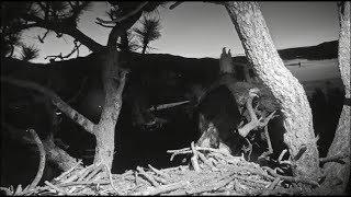 Big Bear Eagles ~ *Simba Sleeps Next To Mom All Night Long!* Sweet Morning Chortles ♥♥ 7.14.19