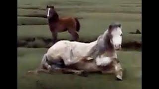 Мама-лошадь попала в ловушку. Жеребенок бегает вокруг. Хорошо, что спасатели подоспели вовремя!