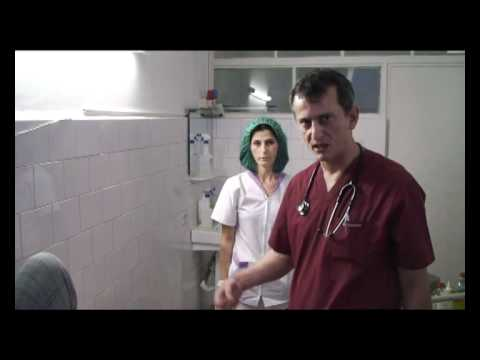 Salcia albă cu varicoză