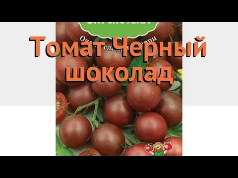 Томат обыкновенный Черный шоколад 🌿 обзор: как сажать, семена томата Черный шоколад
