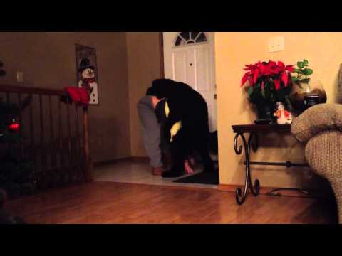 Humping Dog Yoga Fail