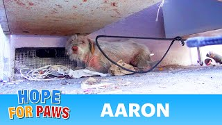 Hope For Paws: Homeless sick dog living under cars for 7 months - finally saved!  Please share. - dooclip.me