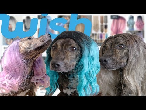 Trying Wigs From Wish On My DOG!