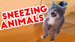Try Not To Laugh At These Sneezing Pets & Animals of 2016 Weekly Compilation | Funny Pet Videos