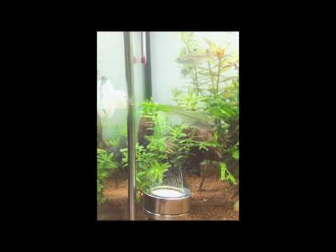 The best Aquarium Fish Stainless Steel CO2 Diffuser!