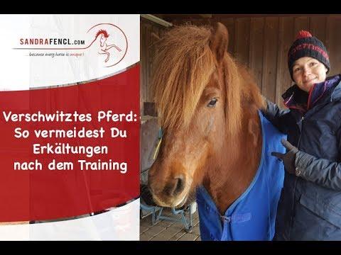 Verschwitztes Pferd nach dem Training: So vermeidest Du Erkältungen