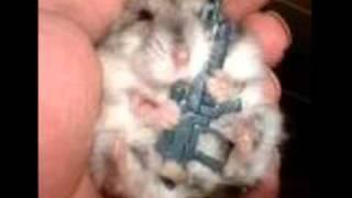 Cute Hamster Pics!