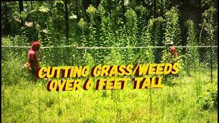Cutting Grass/Weeds Over 6 FEET TALL!!!