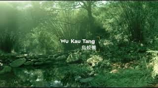 [BreatheInTHEFOREST]全港首個VR森林浴體驗之旅