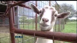 Cashing in on farm, ranch tax breaks - 6 pm News