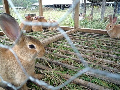 , title : 'Rabbit farming is an emerging but profitable business