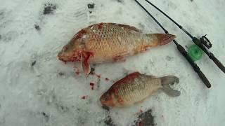 Зимняя рыбалка на пруду карп карась