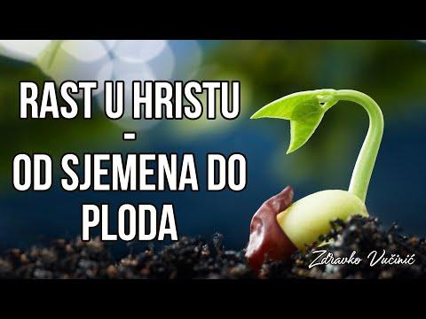 Zdravko Vučinić: Rast u Hristu – od sjemena do ploda