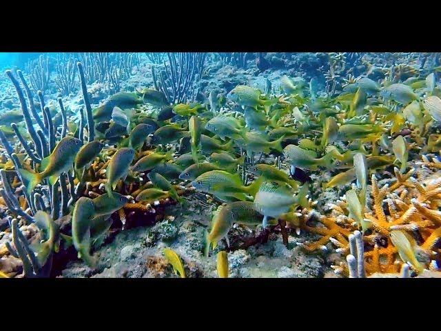 Vista Park Reef | Scuba Diving | Fort Lauderdale | Florida