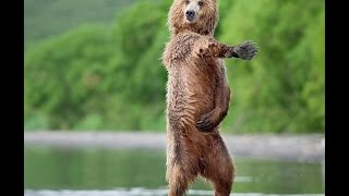 CRAZY ANIMALS DANCING (PARTY ANIMALS)