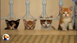 Kedi Documentary: Street Cats Of Istanbul | The Dodo