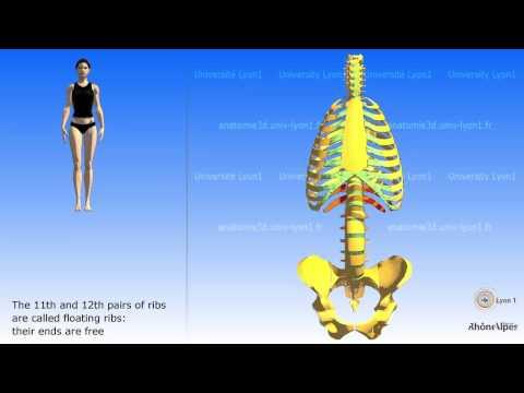 Su quanti è possibile perdere il peso da yoga di professioni