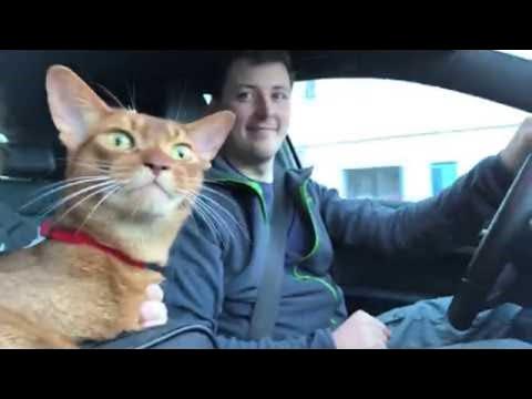 סרטון מקסים של חתול שמח ששר ביחד עם בעליו
