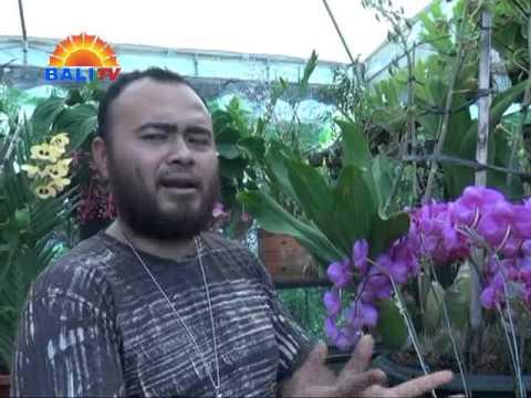 Video CARA MUDAH MERAWAT ANGGREK BULAN