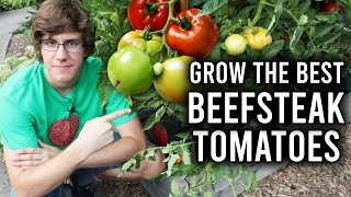 How to Grow Beefsteak Tomatoes
