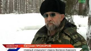 В Татарстане появились гигантские волки? ТНВ
