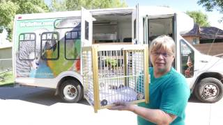 Ginger's Parrots Rescue - Kenny Goes on Birdie Bus!