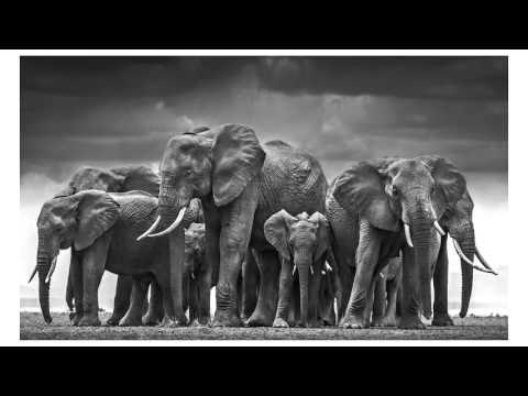 wildlife photography secrets by david yarrow