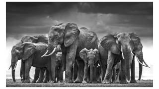 David Yarrow: Kicked By An Elephant