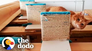 Senior Cat Has Stairs Built For Him To Reach Cuddles With His Favorite Person | The Dodo by The Dodo
