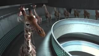 High diving giraffes VIDEO funny video