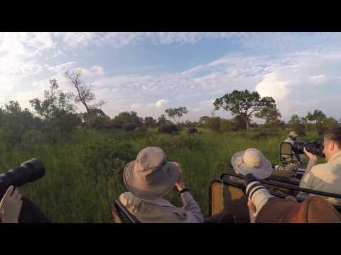 Photographing Djuma Elephants with Penda Photo Tours