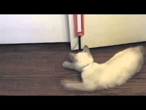 Fling-ama-String Cat Toy Video