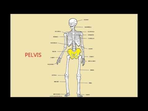 Dolor en el lado izquierdo de los músculos del abdomen y la espalda en las mujeres