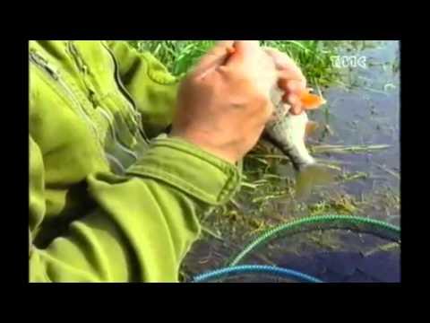 Video che pesca potyag