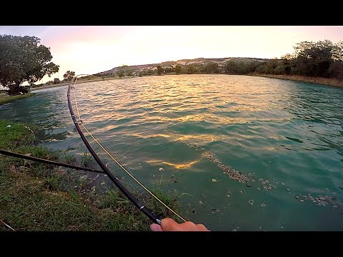 Il pesce più GRANDE che abbia MAI PRESO! - Combattimento EPICO 50 MINUTI!