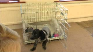 Top Training Tips- Crate Training