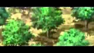Naruto Shippuden DUB Ep  320 - hmong video